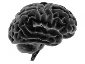 brain xray 3d white background