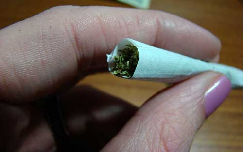 cannabis habit